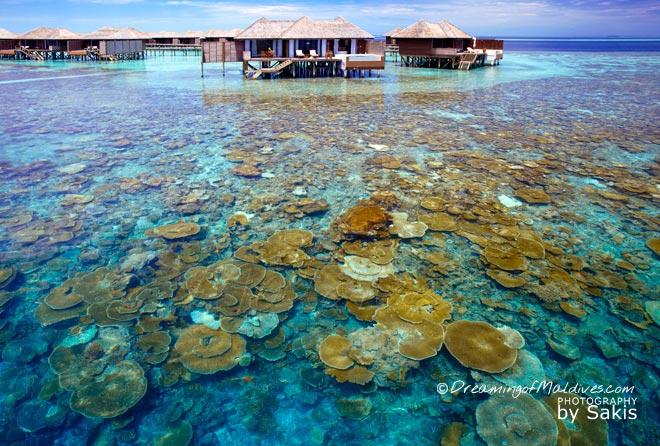 Lily Beach Maldives best maldives water Villas