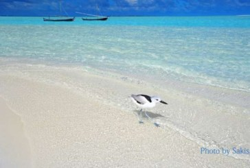 Photo of the day Maldives bird