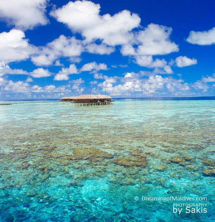 Free photo: Maldives, Coconut Tree, Sea, Resort - Free Image on ...