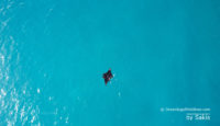 Photo of The Day : A Manta swimming in a Maldives lagoon… caught from the air
