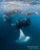 Dive with Mantas at Amilla. Hanifaru Bay