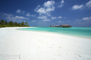 Surf In Style in Dhaalu. Niyama Maldives Luxury Surf Resort