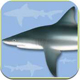 App Sharks and Rays Identification Guide