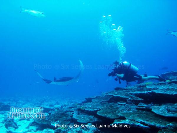 Diving with Mantas - Diving at Six Senses Laamu - Laamu Atoll Maldives