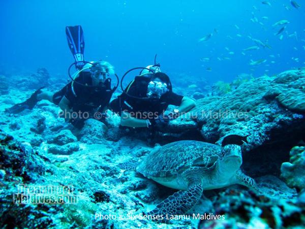Diving with turtles at Six Senses Laamu - Laamu Atoll Maldives