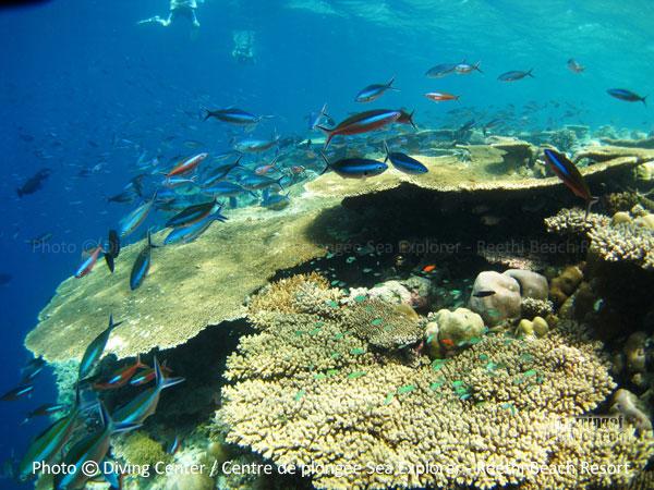 Snorkeling on a Coral Garden - Baa Atoll Reethi Beach Resort Maldives