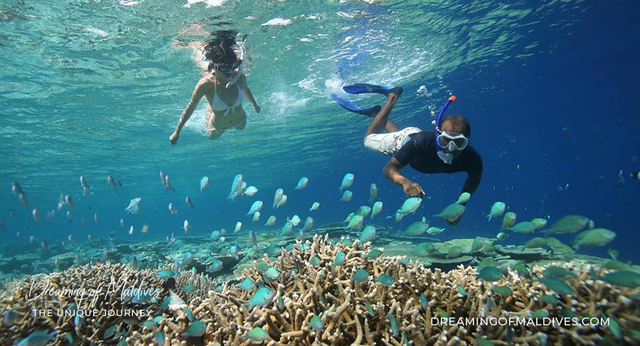 Snorkeling in Maldives: What you need to Know Before You Go