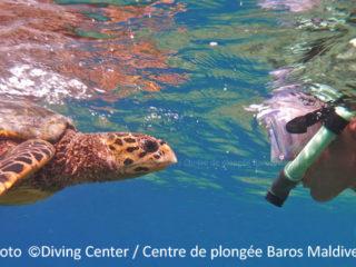 Fantastic Turtle encounter during a snorkeling trip at Baros Maldives