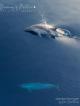 Dolphins Maldives Baa Atoll