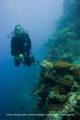 Coral Wall - Maldives - Diving at Meeru Island Resort, Maldives North Male Atoll. Ocean Pro