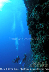 Diving along coral walls in North Male Atoll.