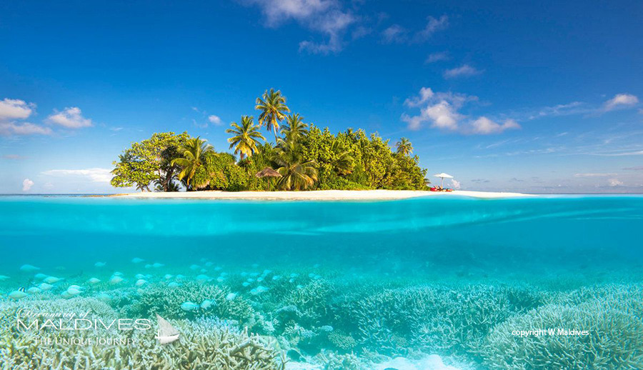 Things To Do In Maldives. Explore the wonderful world that is underwater