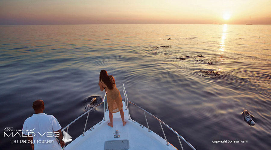 Things To Do In Maldives. Take a sunset cruise and spot dolphins