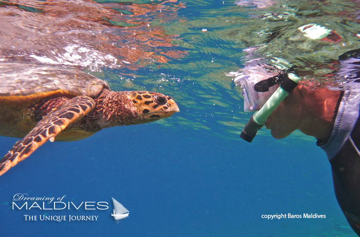 Things to Do in Maldives Snorkel a House Reef and Search for Turtles