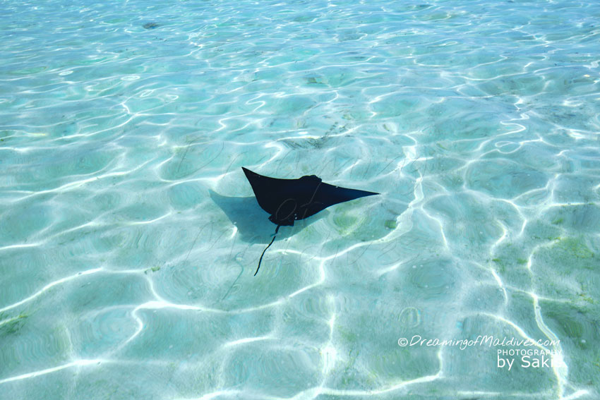Things To Do In Maldives. Observe Local Wildlife