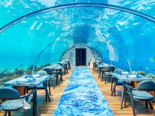 The underwater restaurant in Maldives Hurawalhi 5.8