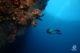 Maldives underwater photo Free Desktop Wallpaper