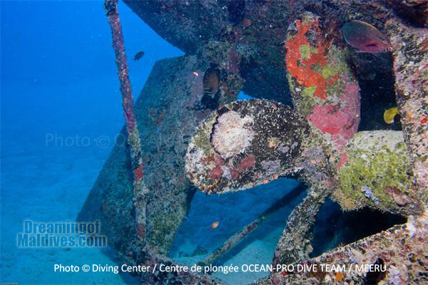 West Rock Wreck - Maldives - Diving at Meeru Island Resort, Maldives North Male Atoll. Ocean Pro