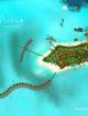 You and Me Maldives Island resort map